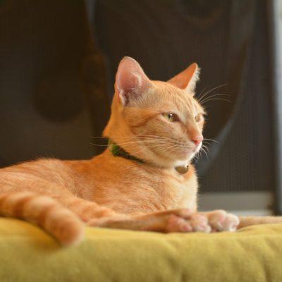 Forslag til indretning med kattehuler